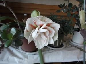 エアーホッケー大会と春の訪れ4