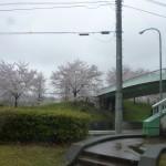 ☆春のお花見☆3